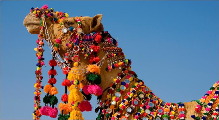 Pushkar Camel Fair @TheRoyaleIndia