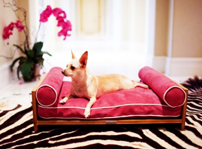 Designer French Furniture for Pets @TheRoyaleIndia