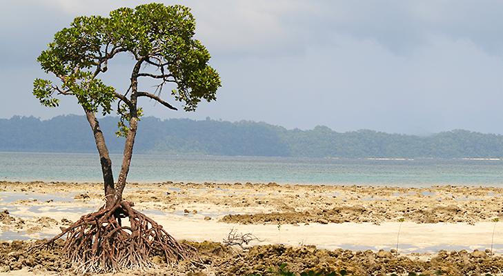 Andaman -5 Places You Should Visit in 2014 @TheRoyaleIndia
