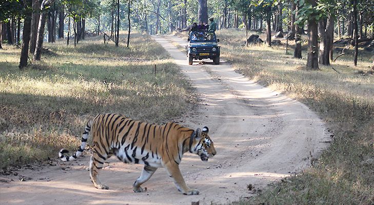 Tiger Quest In MP - 5 Places You Should Visit in 2014 @TheRoyaleIndia