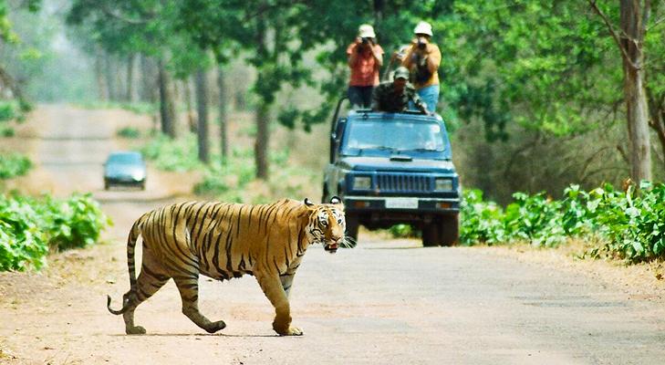 Tadoba Andhari Tiger Reserve @TheRoyaleIndia