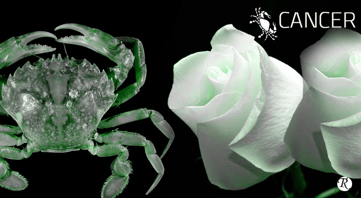 White Rose as a gift to your Cancerian partner @TheRoyaleIndia
