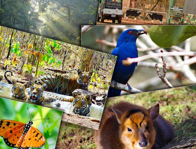 Wildlife Sancturies in Maharashtra @TheRoyaleIndia