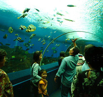 underwater world sentosa island @TheRoyaleIndia