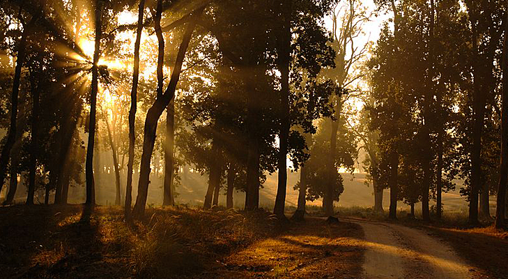 Morning in kanha park @TheRoyaleIndia