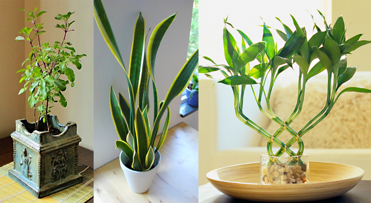 5 mistakes to avoid as per vaastu shastra for house the royale - Good plants for home ...