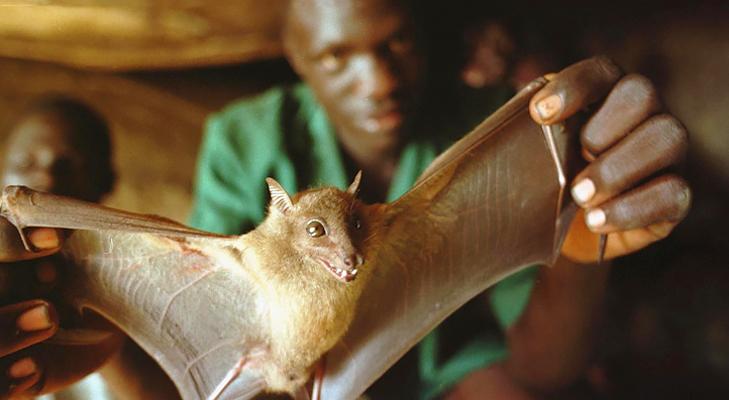 ebola virus bat @TheRoyaleIndia