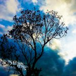 Tips to Capture Monsoon Madness