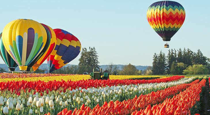 tulip_festival @TheRoyaleIndia