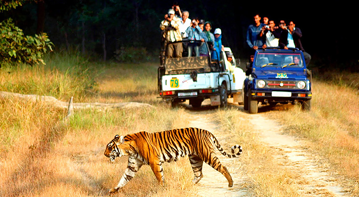 Jim Corbett National Park @TheRoyaleIndia