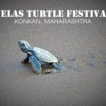 Nurturing the Nature At Velas Turtle Festival