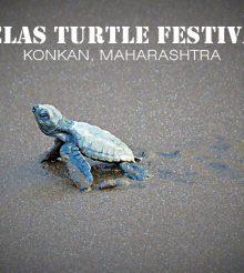 Nurturing the Nature At Velas Turtle Festival