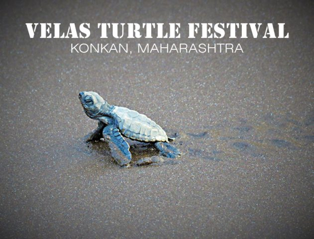 Nurturing the Nature At Velas Turtle Festival @TheRoyaleIndia