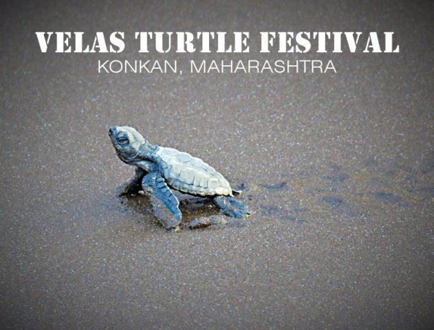 Nurturing the Nature At Velas Turtle Festival @TheRoyaleIndia