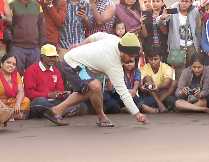 volunteer releasing the hatchling into the sea @TheRoyaleIndia