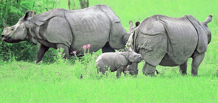 Kaziranga National Park @TheRoyaleIndia