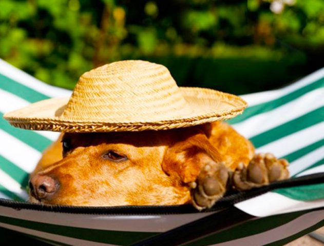 Pet Friendly Travel Locations in India @TheRoyaleIndia