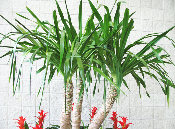 plants for home as per vastu @TheRoyaleIndia