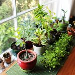 Planting hopes the Vastu way!