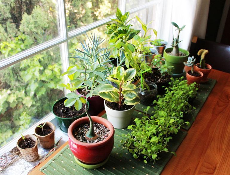 vastu plants for home @TheRoyaleIndia