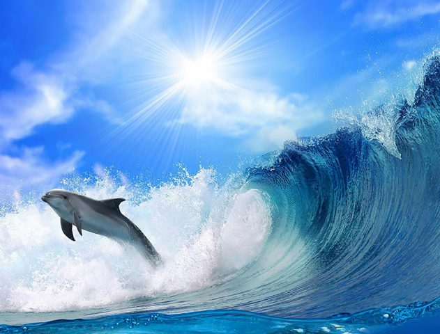 Dolphins and Whales in india @TheRoyaleIndia