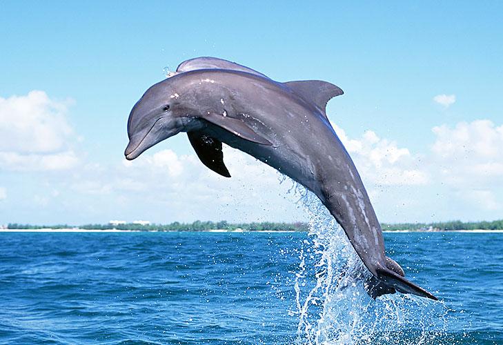 Dolphins in Goa @TheRoyaleIndia