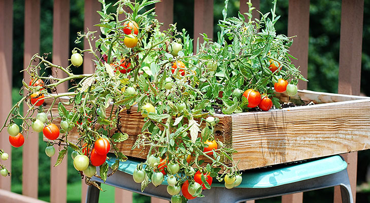 Tips for terrace garden the royale for Terrace vegetable garden india