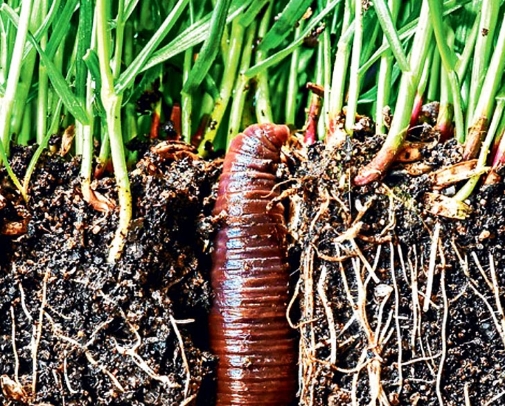 earthworm fertilise soil @TheRoyaleIndia