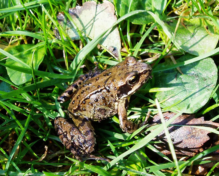 frogs and toads in garden @TheRoyaleIndia