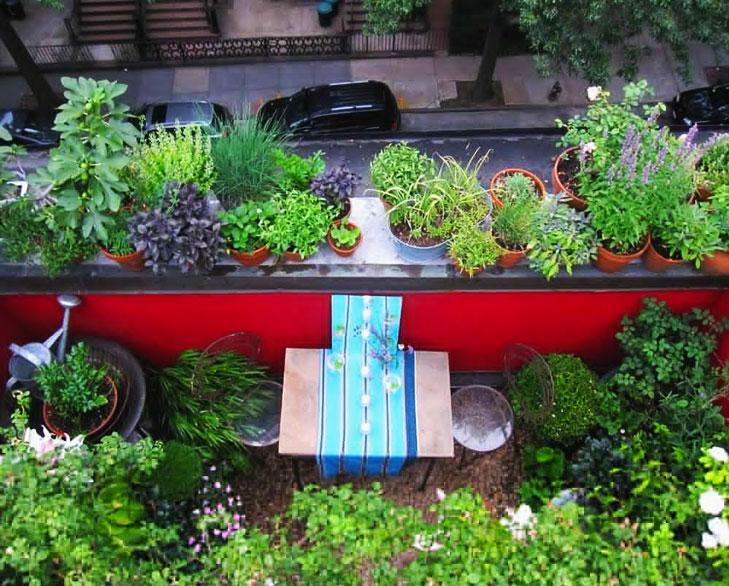 Terrace gardening @TheRoyaleIndia
