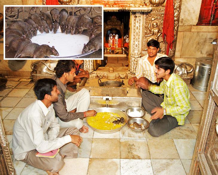 karni mata mandir rats @TheRoyaleIndia