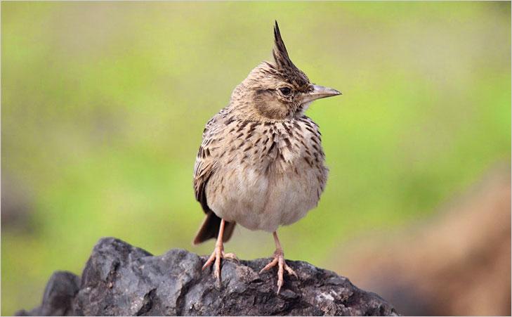 bhimashankar wildlife sanctuary @TheRoyaleIndia