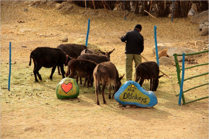 Donkey Sanctuary (Leh) @TheRoyaleIndia