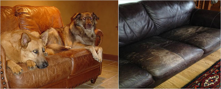 Keep pets away from Leather Furniture @TheRoyaleIndia