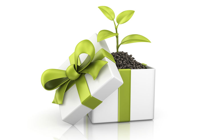 organic gifts diwali plants @TheRoyaleIndia