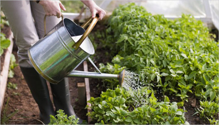watering plants kitchen garden @TheRoyaleIndia
