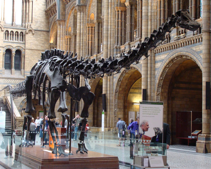 natural history museum london @TheRoyaleIndia