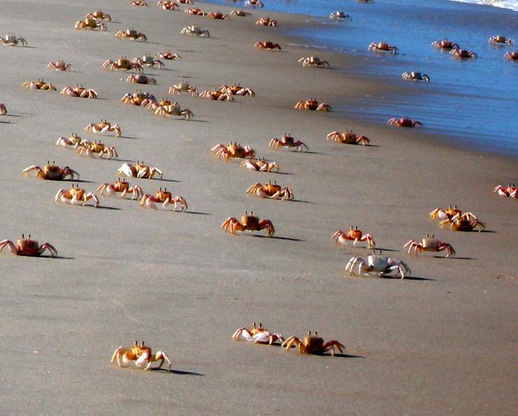 Kurla crabs mumbai @TheRoyaleIndia