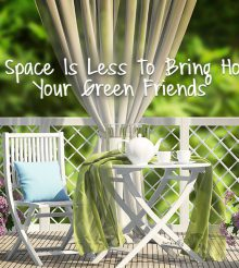 You are just seven steps away from getting that perfect balcony garden