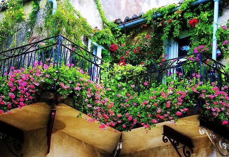 Balcony garden ideas railing climbers @TheRoyaleIndia