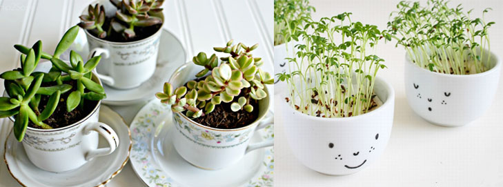 Recycle old tea cups planters