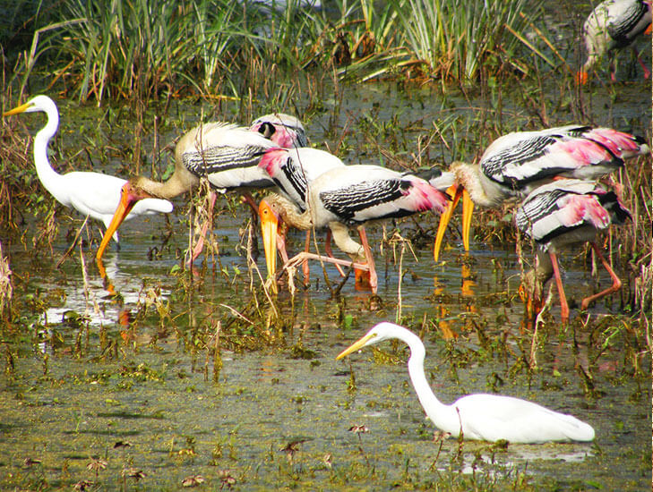 Keoladeo National Park @TheRoyaleIndia