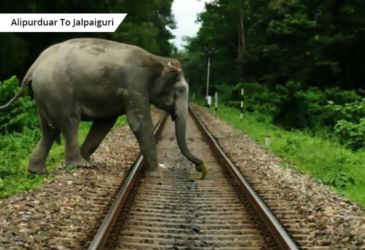 rail route through bengal forest reserve @TheRoyaleIndia