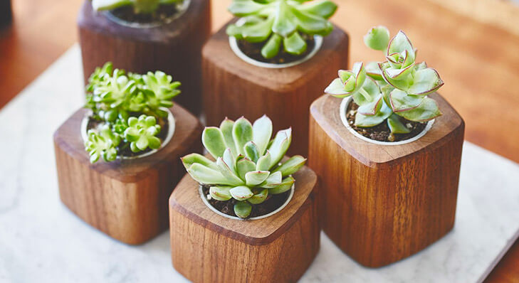 Tips to personalise office desk small plants @TheRoyaleIndia
