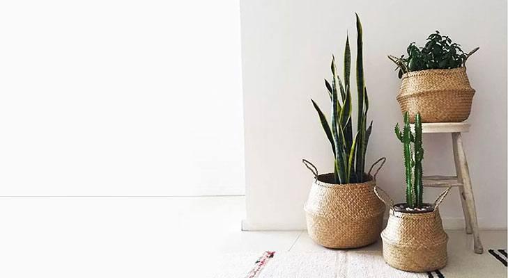Indoor plants in basket @TheRoyaleIndia