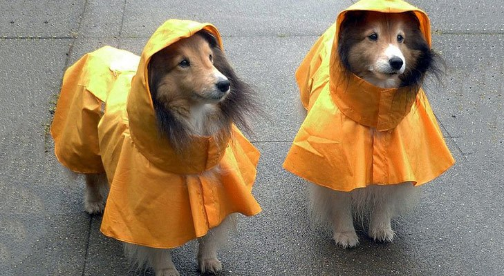 raincoat for pet @TheRoyaleIndia