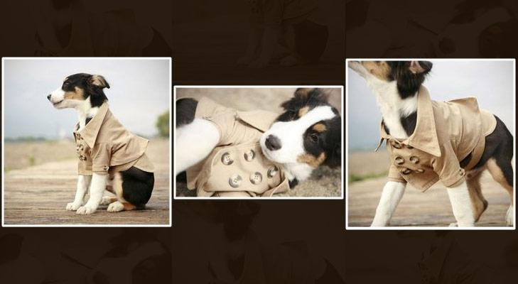 Shirt for pets @TheRoyaleIndia