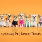 Upcoming Pet Fashion Trends