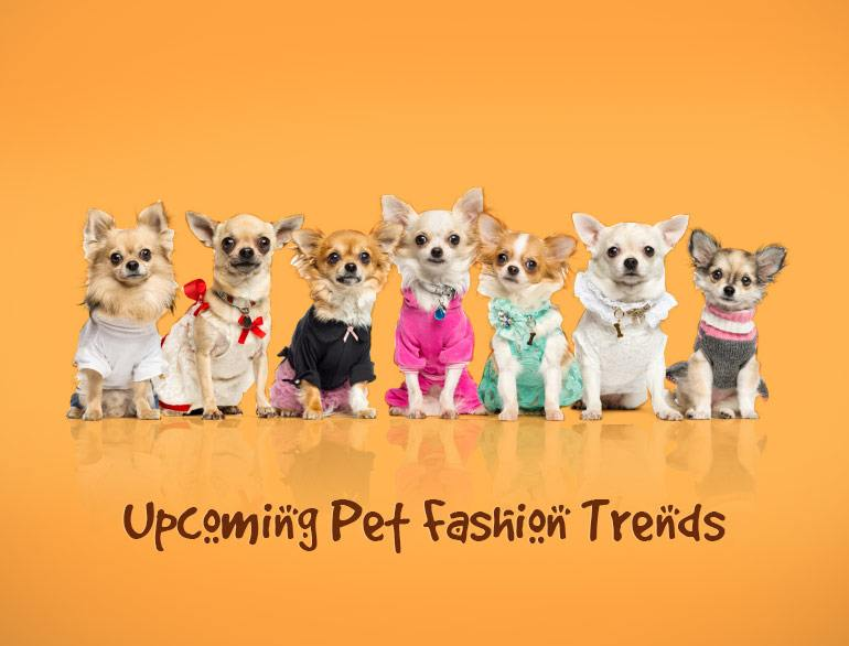 Upcoming Pet Fashion Trends @TheRoyaleIndia