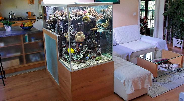 Vastu tips fish aquarium @TheRoyaleIndia